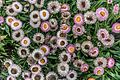 ADD SOME COLOUR TO YOUR LIFE (FLOWERS IN A PUBLIC PARK)-120152 (28650202394).jpg