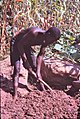 ASC Leiden - W.E.A. van Beek Collection - Dogon architecture 01 - A man makes clay for house building, Tireli, Mali 1980.jpg