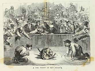 """Bull and Terrier - """"A Dog Fight at Kit Burn's"""" by Edward Winslow Martin. Philadelphia, 1868"""
