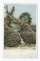 A Few Geraniums, Florida (NYPL b12647398-67776).tiff