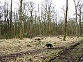 A Recently Created Woodland Clearing at Ashridge - geograph.org.uk - 1193794.jpg
