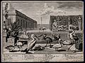 A garden pond with nine large exotic birds, two potted plant Wellcome V0044517.jpg