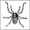 A monograph of the terrestrial Palaeozoic Arachnida of North America progress Page37 fig 41 frame.png