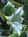 A scene of botanical garden Ooty4.jpg