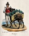 A street trader has the panniers on his donkey loaded with v Wellcome V0039673.jpg