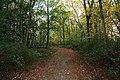A walk through Twyford Wood, No 10 - geograph.org.uk - 272128.jpg