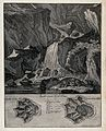 Above, an otter drinking from a stream with a waterfall in t Wellcome V0021110.jpg