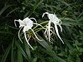 Aburi garden 9.jpg