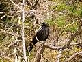 Acadia National Park (8111126916).jpg