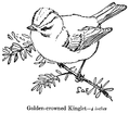 Accompany Manual of Bird Study 0033-10.png