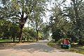 Acharya Jagadish Chandra Bose Indian Botanic Garden - Howrah 2011-01-08 9839.JPG