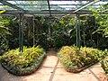 Acharya Jagadish Chandra Bose Indian Botanic Garden - Howrah 2011-03-20 2064.JPG