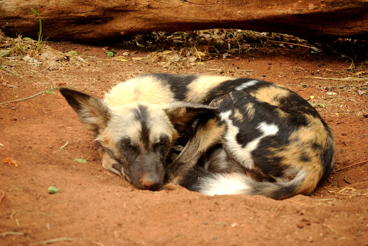 Mother Dog Eats Dead Puppies