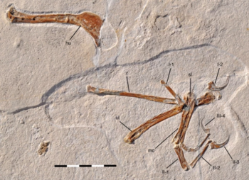Alcmonavis holotype.png