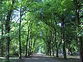 Alexandra Park in June - geograph.org.uk - 329880.jpg