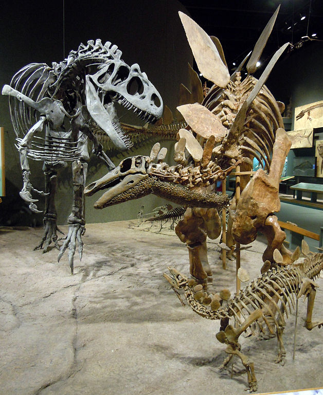 Allosaurus fragilis et Stegosaurus stenops