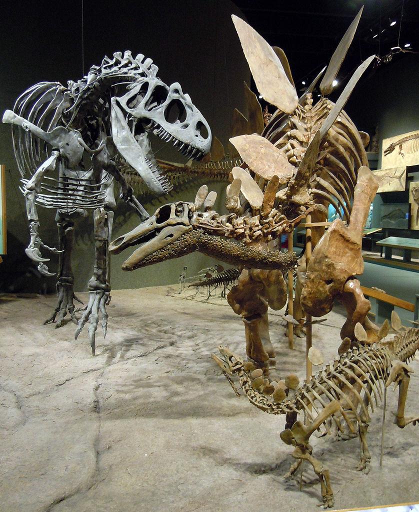 Photo Of Denver Museum Of Nature Science Entry: File:Allosaurus Attacks Stegosaurus.jpg