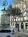 Alzina del passeig de Gràcia P1420892.JPG