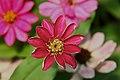 Amazing-flower blossom - Virginia - ForestWander.jpg