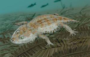 Amphibamus - Amphibamus grandiceps