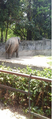 An elephant at Alipore Zoo.png