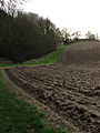 An irregular field-woodland boundary - geograph.org.uk - 668131.jpg