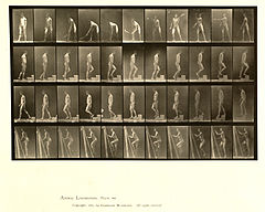 Animal locomotion. Plate 486 (Boston Public Library).jpg