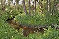 Anlooerdiepje Nationaal Park Drentsche Aa.jpg