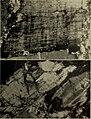 Annali del Museo civico di storia naturale Giacomo Doria (1954) (17787448084).jpg