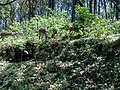 Annamalai Tiger Reserve - panoramio (3).jpg