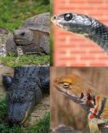 List of U S  state reptiles - Wikipedia
