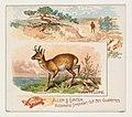 Antelope, from Quadrupeds series (N41) for Allen & Ginter Cigarettes MET DP839191.jpg