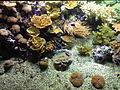 Aquarium Genoa 62.JPG