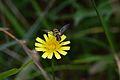 Araignées, insectes et fleurs de la forêt de Moulière (Les Chirons Noirs) (28938469062).jpg