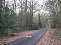 Arden Drive and Dorridge Wood B93 - geograph.org.uk - 2196821.jpg