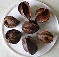 Arjuna fruits(Dried).jpg