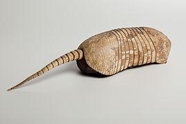 Деветопоясен броненосец (Dasypus novemcinctus)