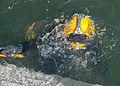 Army divers splash headfirst into training 130221-A-KU062-099.jpg