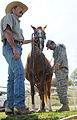 Army vets get valuable training at Redwings Horse Sanctuary 130323-A-NV895-002.jpg