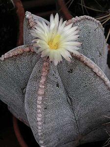 User Cactus Man Wikipedia The Free Encyclopedia