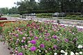 Aug282014 Arboretum 0164 (15118539112).jpg