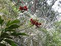 Aura of flora 14.jpg