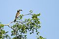 Austin Roberts Bird Sanctuary-037.jpg