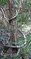 Australia Cairns 13.jpg