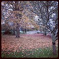 Autumn - panoramio (68).jpg