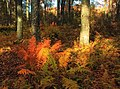 Autumn Tones (2) (9991361845).jpg