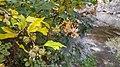 Autumn season in Butanic Garden فصل پاییز در باغ بوتانیکال تفلیس 14.jpg