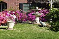 Azaleas and Lawn Art in Bay Knoll (4503491381).jpg
