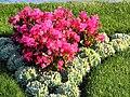 Bürkliplatz - Blumenuhr 2012-07-26 19-27-35 (P7000).JPG