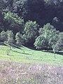 Bărbulețu 137020, Romania - panoramio.jpg
